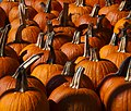 Pumpkins Galore (5337361408).jpg