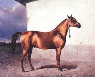 Azerbaijan horse - Karabakh horse. Nikolay Sverchkov, 1865