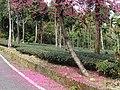 Qingshan Industrial Road 青山產業道路 - panoramio.jpg