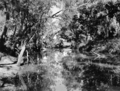 Queensland State Archives 2136 The Barcoo River near Blackall March 1938.png