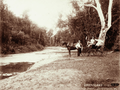 Queensland State Archives 2259 Three men and a buggy at Fairy Bower Rockhampton c 1897.png