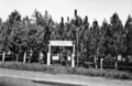Queensland State Archives 2845 Slacks Creek State School Experimental Pine Plot 1946.png
