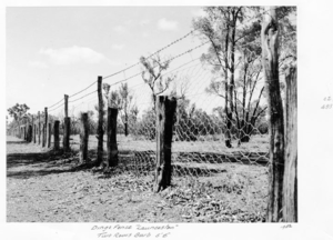 Dingo Fence - A portion of the Dingo Fence in 1952 in Queensland