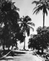Queensland State Archives 919 Magnetic Island North Queensland c 1931.png