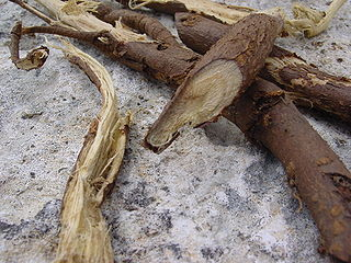Liquorice root with bark