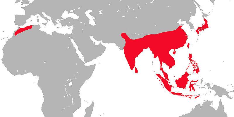 Fil:Répartition mondiale des macaques.jpg