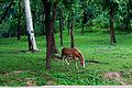 Ramsagor horse.jpg