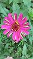 Rare flower under extinct.jpg