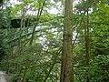 Ravenna Park Bridge 07.jpg