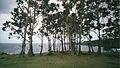Ravine Glissante sur la côte Est (3058871770).jpg