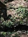 Raymondskill Falls - Pennsylvania (5677492519).jpg