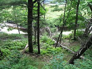 English: Photo taken walking the trail at the ...