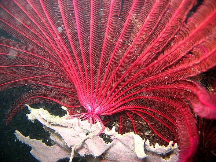 Reef4351 - Flickr - NOAA Photo Library.jpg