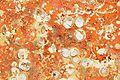 Restes de coquillages et d'algues sur un voile de quille (5).JPG