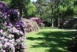 rhododendron park bremen wikipedia la enciclopedia libre. Black Bedroom Furniture Sets. Home Design Ideas