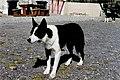 Ring of Kerry - Town dog downstream of bridge - geograph.org.uk - 1569958.jpg