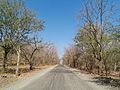 Road to Gir forest.jpg