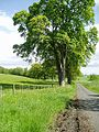 Road to Lilliesleaf Nursery - geograph.org.uk - 176116.jpg