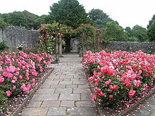 garden with central path and rose beds