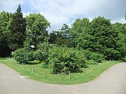 Rosengarten in Bielefeld
