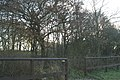 Rough Wood - geograph.org.uk - 89601.jpg
