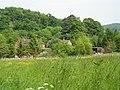 Rough grassland at Rough Leasow, Longley Green - geograph.org.uk - 813151.jpg