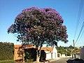 Rua Jonas de Oliveira, Capão Bonito - Mapillary (uG6aM2eIBK0-4H0bl3 dEQ).jpg