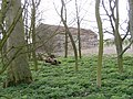 Ruined Barn on Newsham Hill Lane - geograph.org.uk - 1207493.jpg