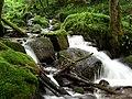 Ruisseau de Chaudefontaine.jpg