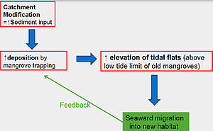 Mangrove tree distribution -  Conceptual model of seaward mangrove migrations