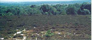 Sallandse Heuvelrug National Park - Panorama of the Ridge of Salland