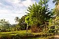 Samaná Province, Dominican Republic - panoramio (34).jpg