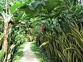 Sansevieria-lined path (7189143147).jpg