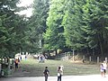 Scalinata di Santa Maria del Bosco - panoramio.jpg