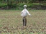 Scarecrow IMG 8742.jpg