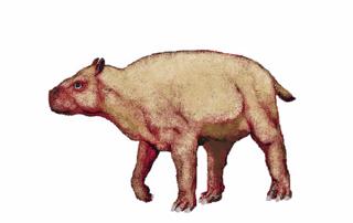 <i>Scarrittia</i> genus of mammals