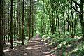 Schleswig-Holstein, Windbergen, Landschaftsschutzgebiet Wodansberg NIK 6735.JPG