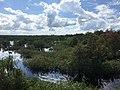 Sebangau River 07.jpg
