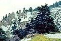 Sierra de las Nieves 1975 09.jpg