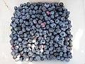 Simon's bucket of blueberries (9423978563).jpg