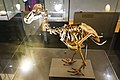 Skeleton of a Dodo Bird (40205294732).jpg
