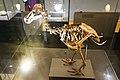Skeleton of a Dodo Bird (40205294732).jpg