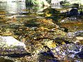 Small brook autumn.JPG