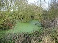 Small pond - geograph.org.uk - 1078675.jpg