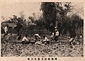 Sowing upon test of productivity of land in Taichu 1919-06.jpg