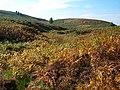 Spa Hill Clough - geograph.org.uk - 63953.jpg