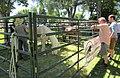Spanish Fork horses (28319670007).jpg