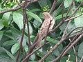 Sparrow on the bough.jpg