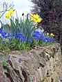 Spring's arrived^ - geograph.org.uk - 1774263.jpg