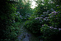 Spring-evening-flowers-trail - West Virginia - ForestWander.jpg